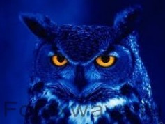 """Night Owl"""